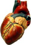 heart-copyleft